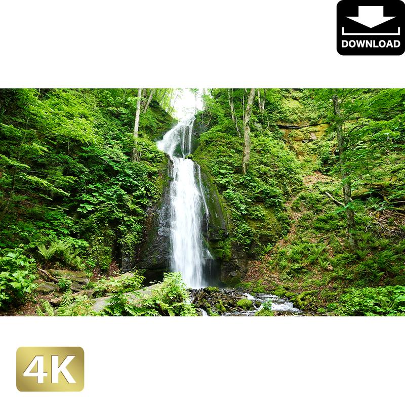 2035061 ■ 奥入瀬渓流 雲井の滝
