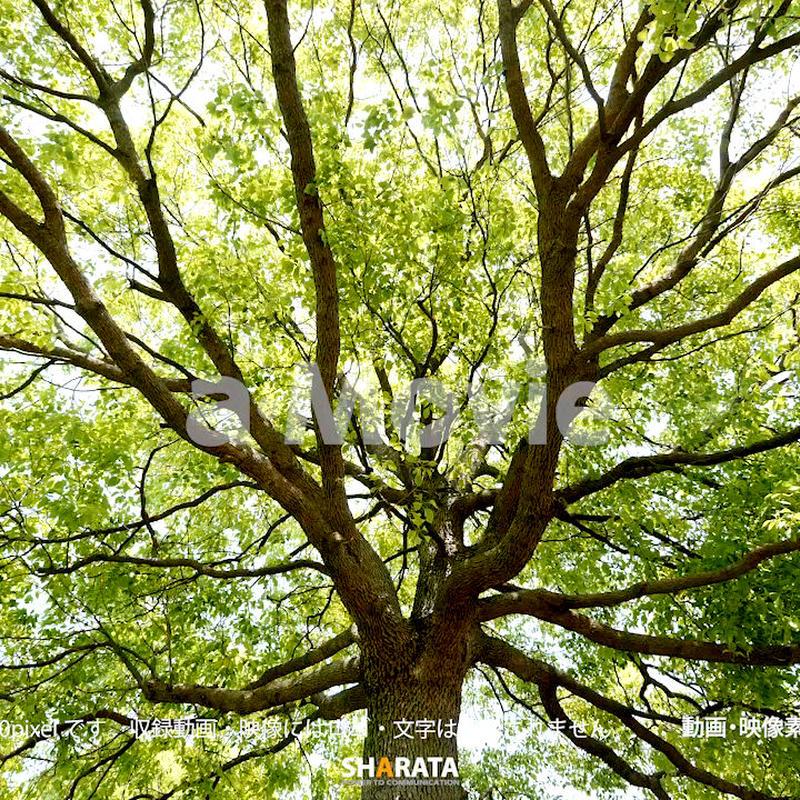 1034020 ■ 渡良瀬遊水池 樹木