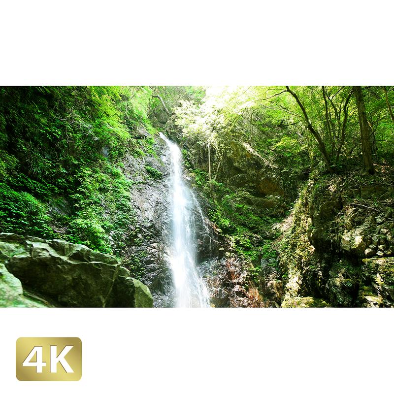 1005022 ■ 秋川渓谷 払沢の滝