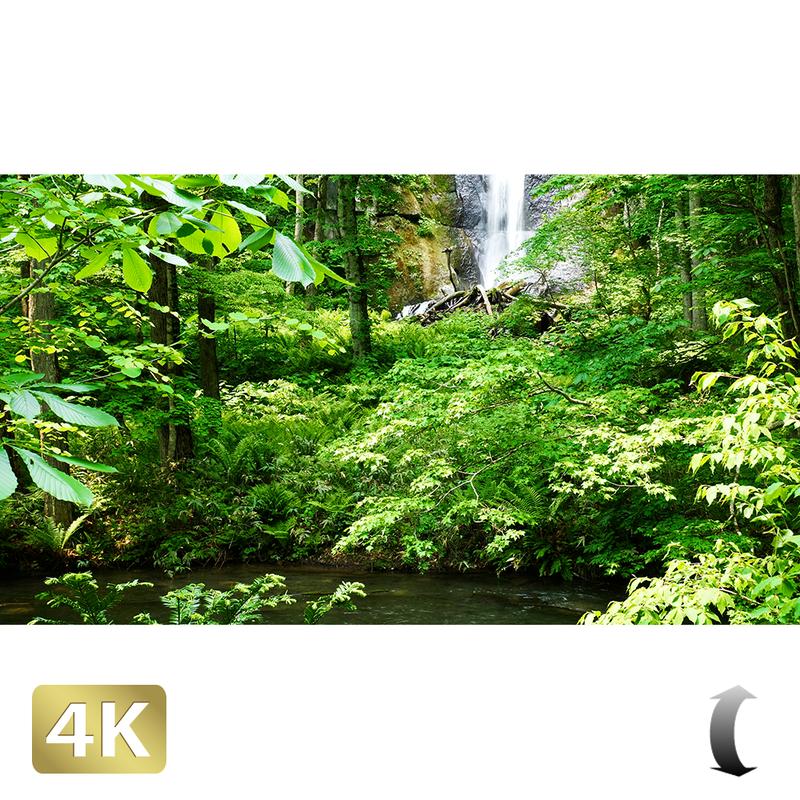 1035108 ■ 奥入瀬渓流 白布の滝