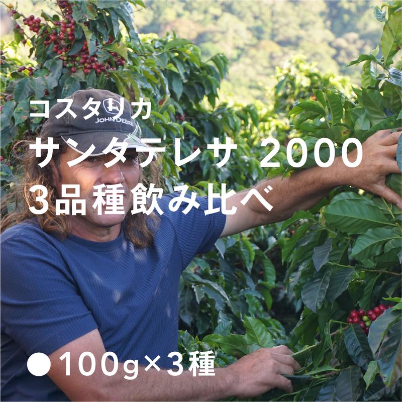 コスタリカ サンタテレサ 2000 / 浅煎り (High Roast)  3品種飲み比べ