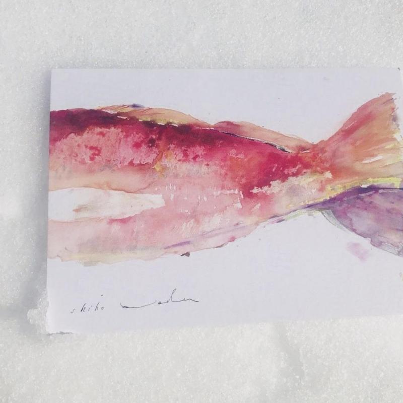 postcard / HAREMA お祝いする鯛