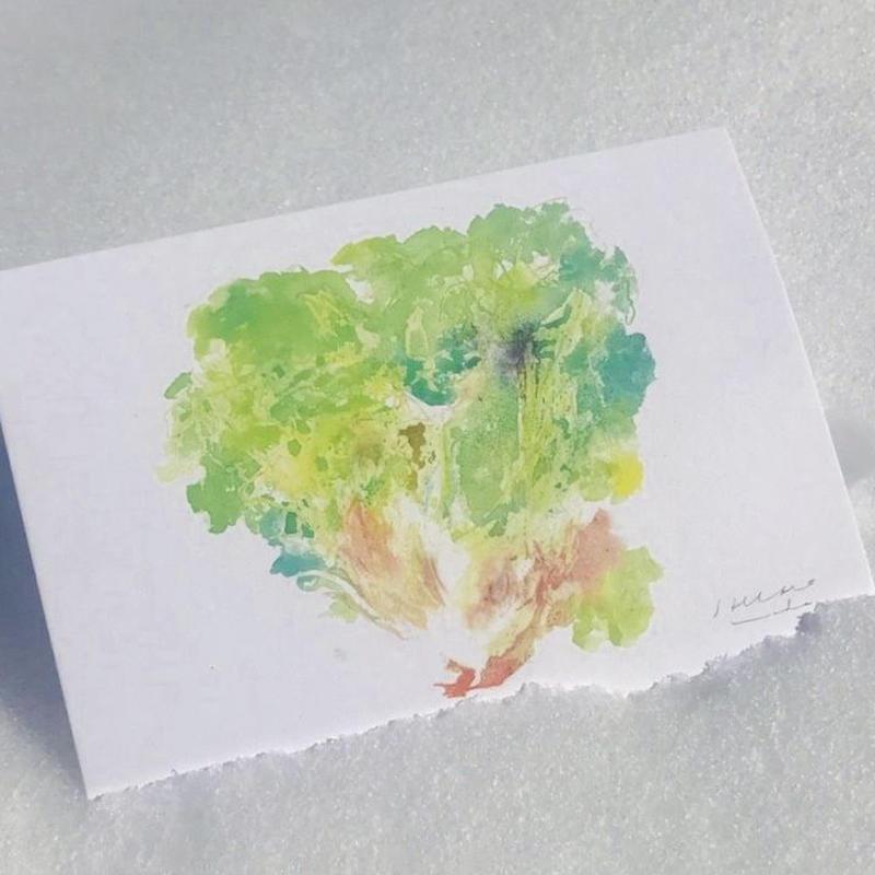 postcard / YASAI 端正に生真面目に