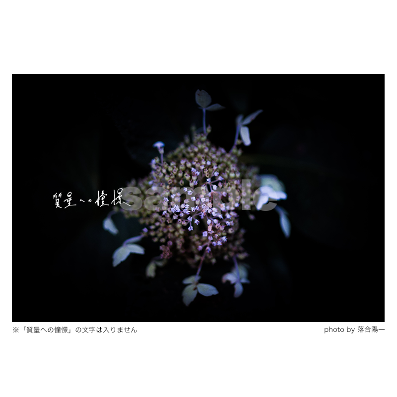 質量への憧憬:花(Mサイズ)