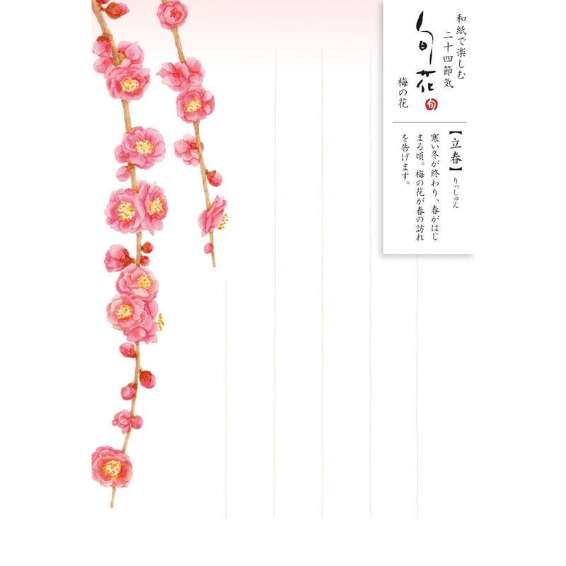 HK99旬花 はがき 梅