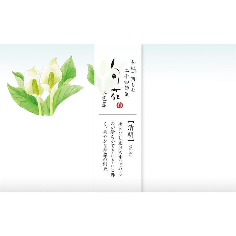 KK140旬花 懐紙 水芭蕉