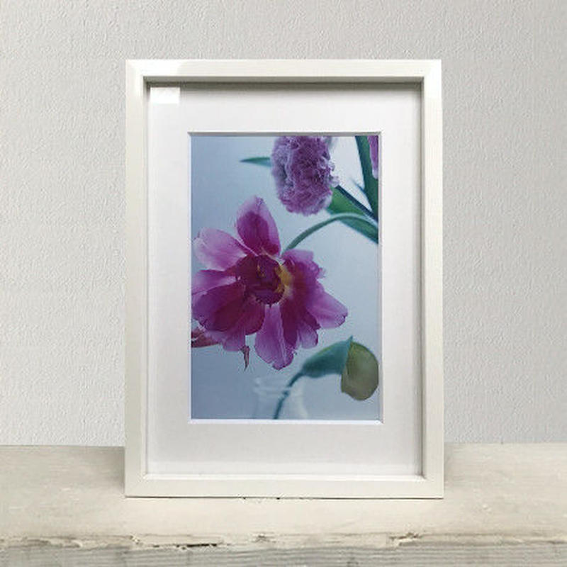 Flower Collecting PHOTO-PRINT(No.5)