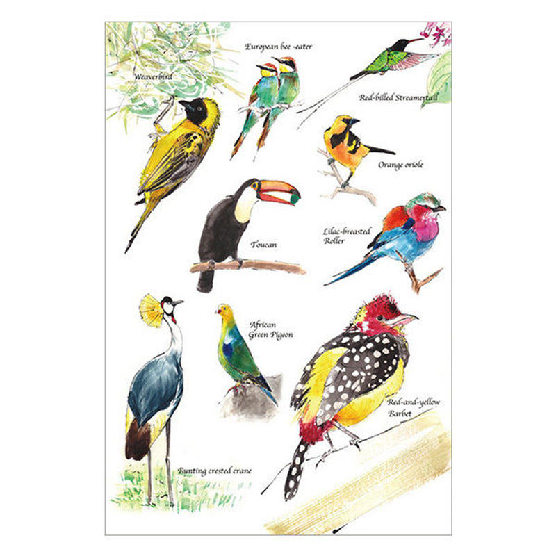 鳥さんポストカード(世界の野鳥)