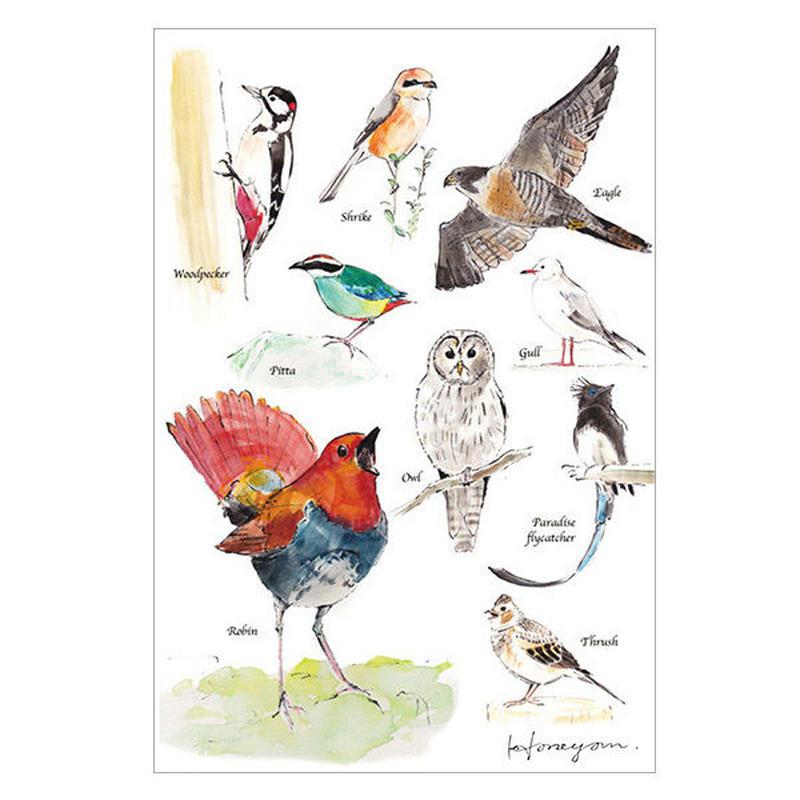 鳥さんポストカード(日本の野鳥)