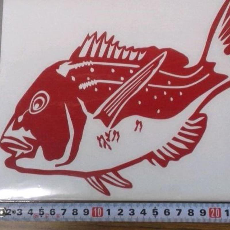 Cー19 カット真鯛 大 赤色 ヌキ