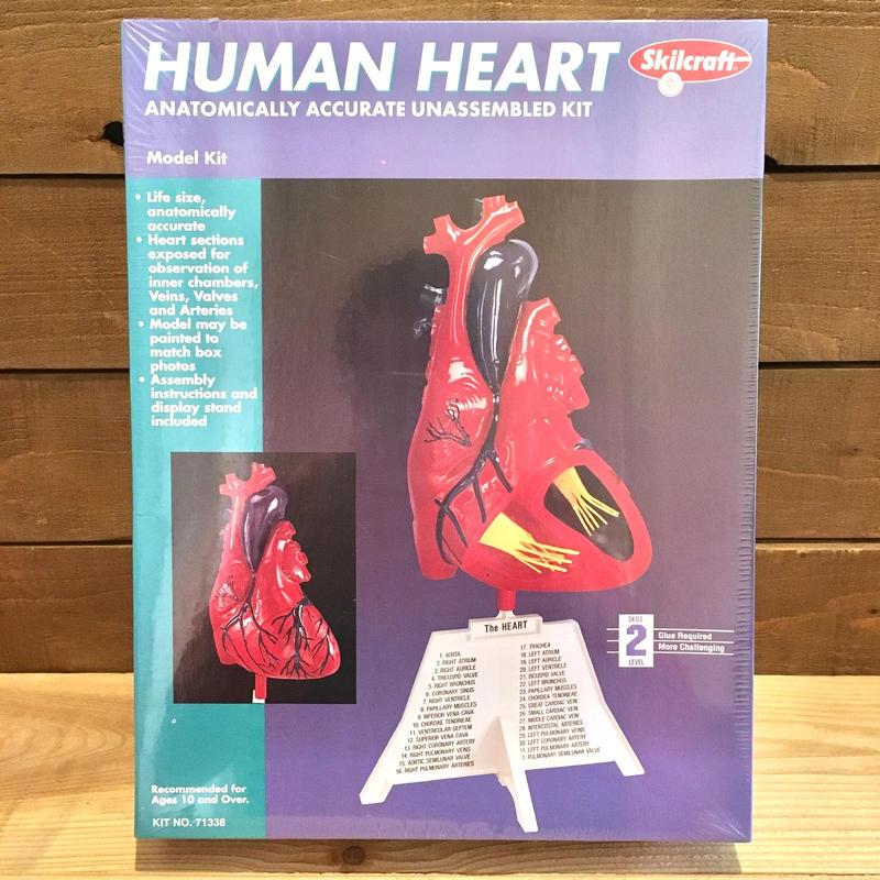 Human Heart Plastic Kit/ヒューマンハート プラモデル/190306-2