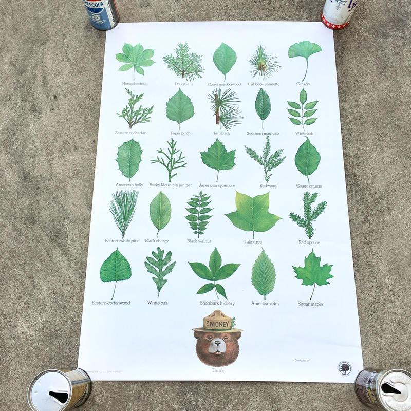 SMOKEY BEAR Education Posterスモーキーベア エデュケーションポスター/181126-5