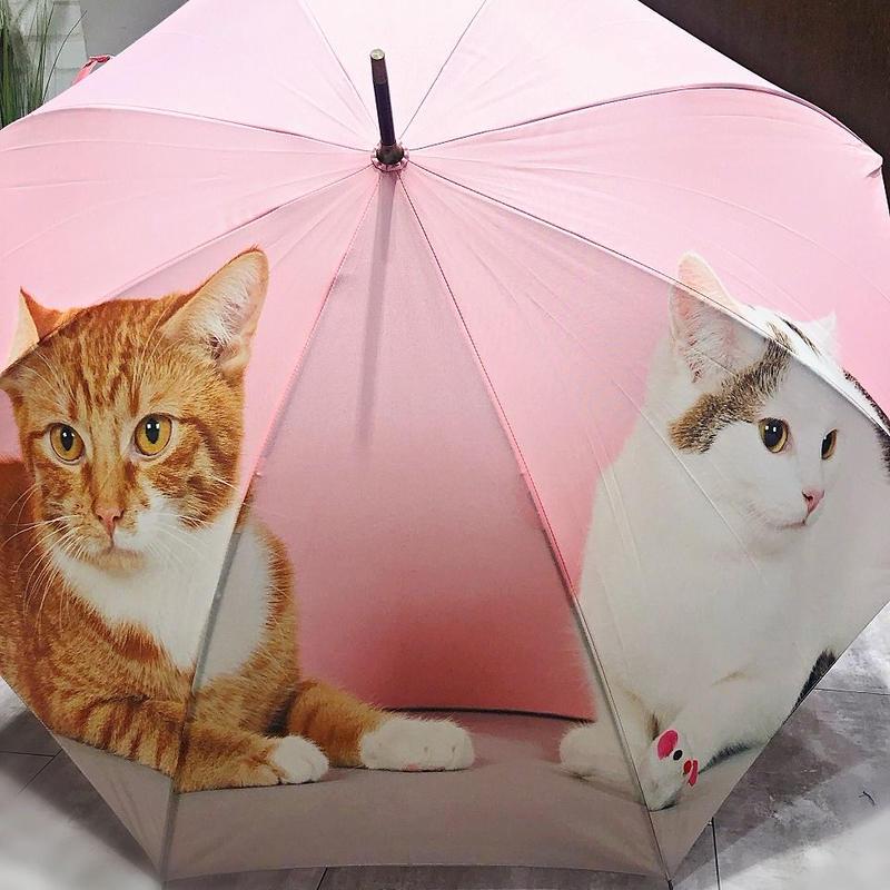 【転写 猫ちゃんシリーズ】60cm 傘専門店 通販 東京 折り畳み 旅傘【Collar Cat B】