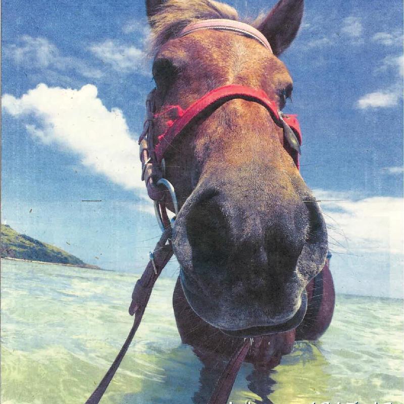 残り数部! 沖縄月桃紙(和紙) 2019与那国馬 カレンダー