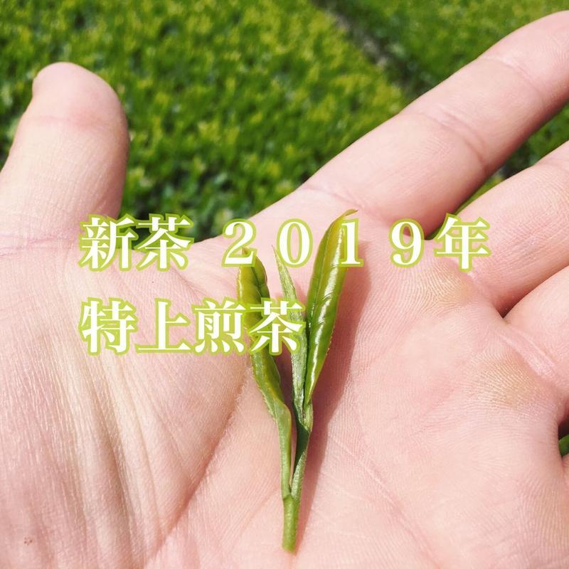 【限定100袋】 無農薬・川根茶 新茶 2019年 特上煎茶(内容量: 100g)