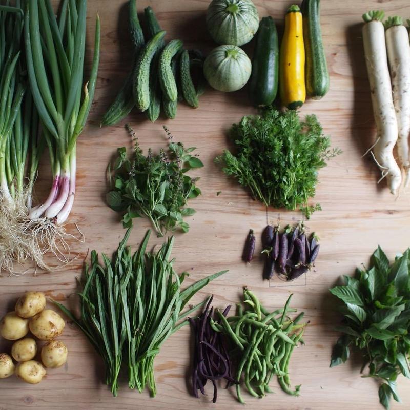 たそがれ野育園 キッチンファームクラス 入園パス(不定期野菜セット受取り有、大豆5kg保証)