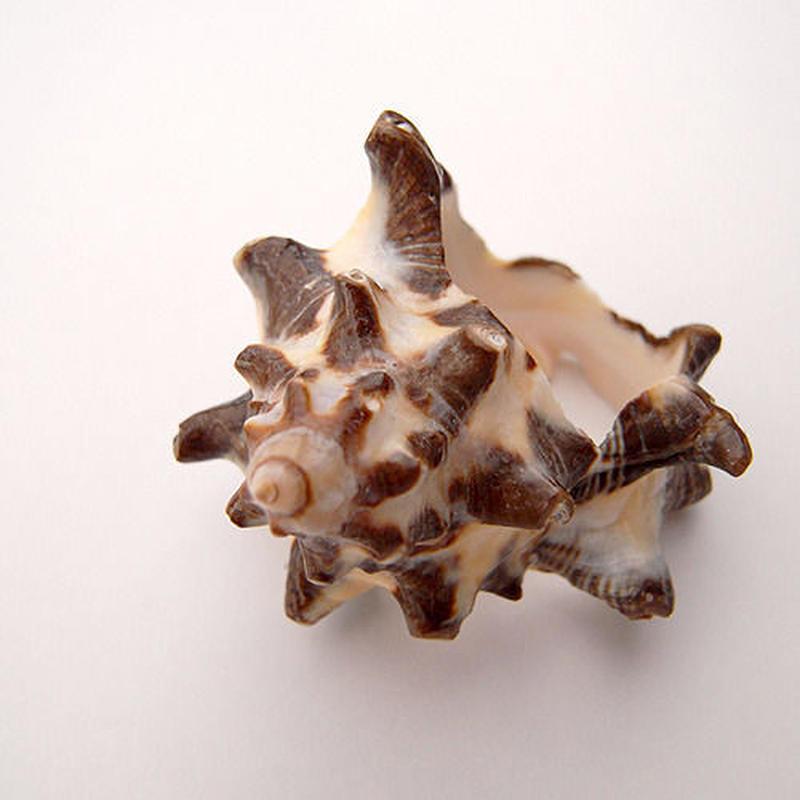 【SALE】うずまき貝のリング・トゲトゲ