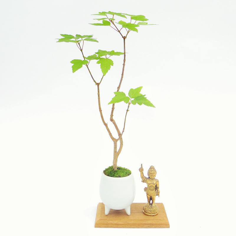 【マイクロ盆栽&仏像(台座付き)】カエデ