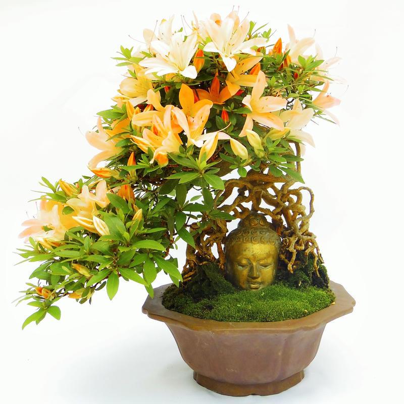 【仏像盆栽】サツキ