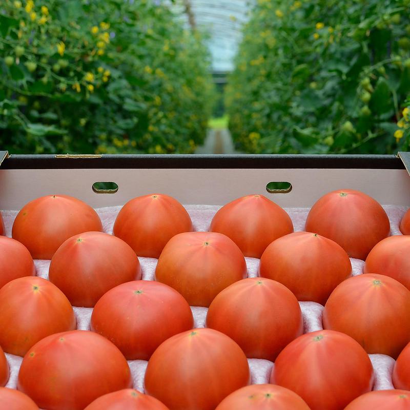 こだわりフルーツトマト(約2.5~3kg)【1〜3箱ご注文はこちら!】