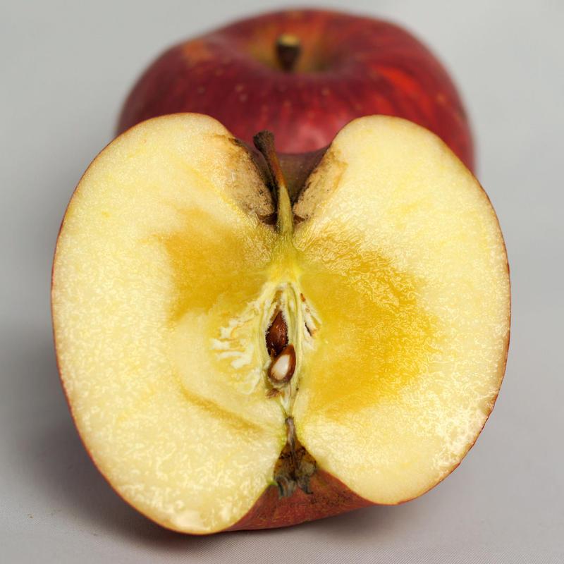 【送料無料】「サンふじ」10kg(28~36玉)【青森県産りんご:つる割れ/傷】