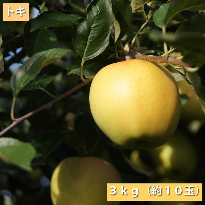 【送料無料】「トキ」3kg(約10玉)【青森県産りんご:家庭用】