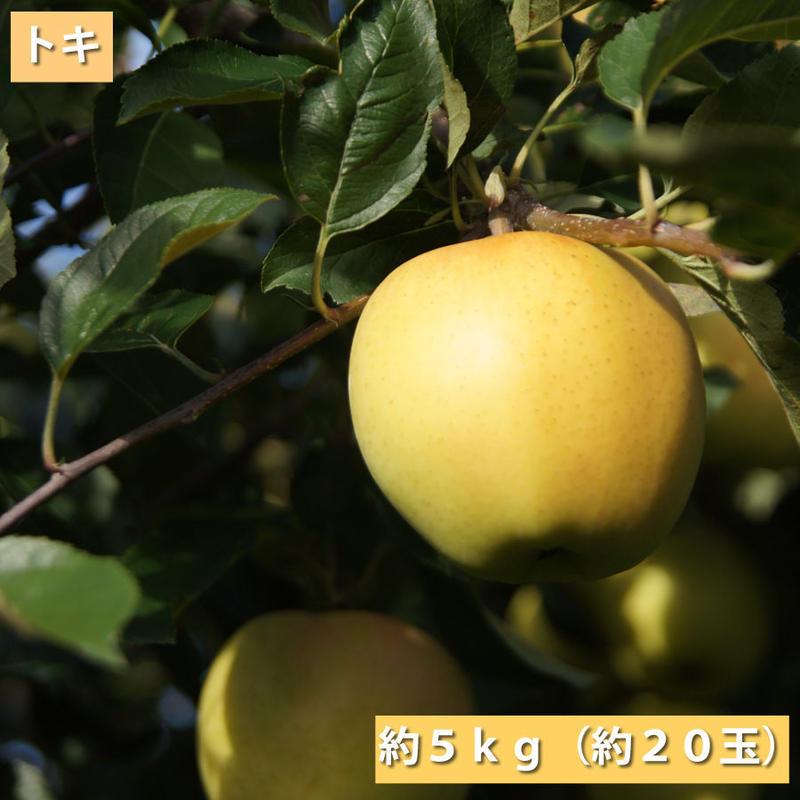 【送料無料】「トキ」5kg(約18玉)【青森県産りんご:家庭用】8
