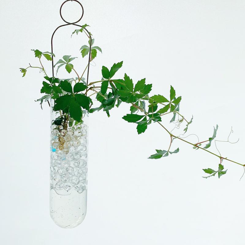 【土を使わない観葉植物】 ハンギングガラス シッサスガーラント