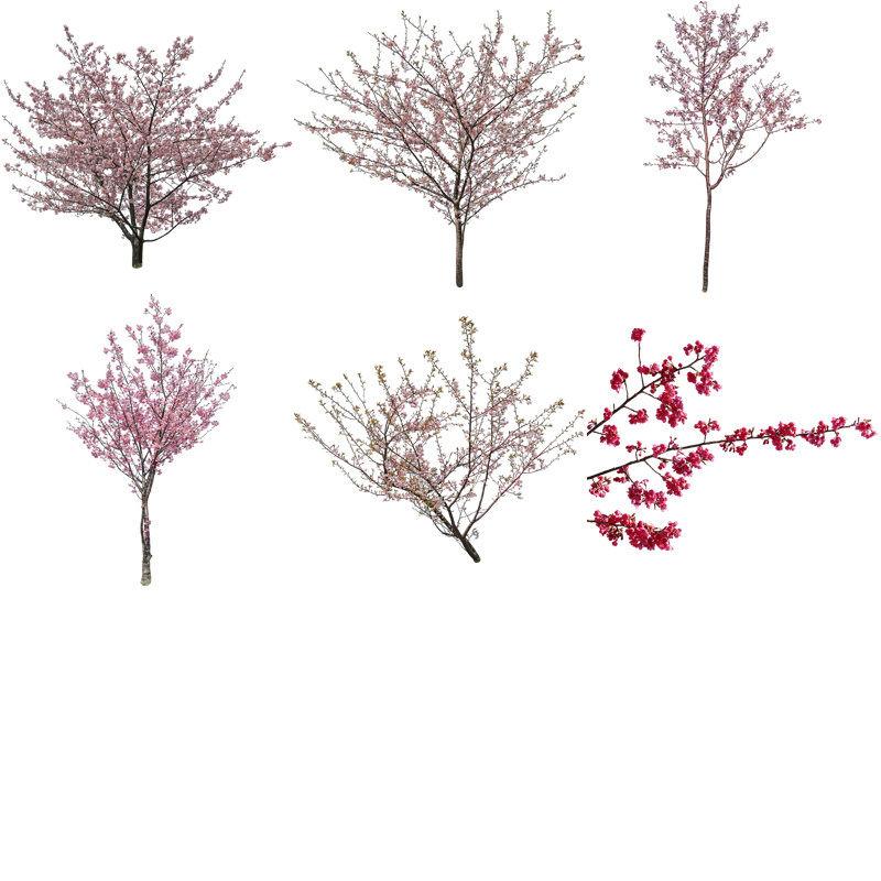 桜 切り抜き素材6個セット  - Cherry Blossoms   sa_022