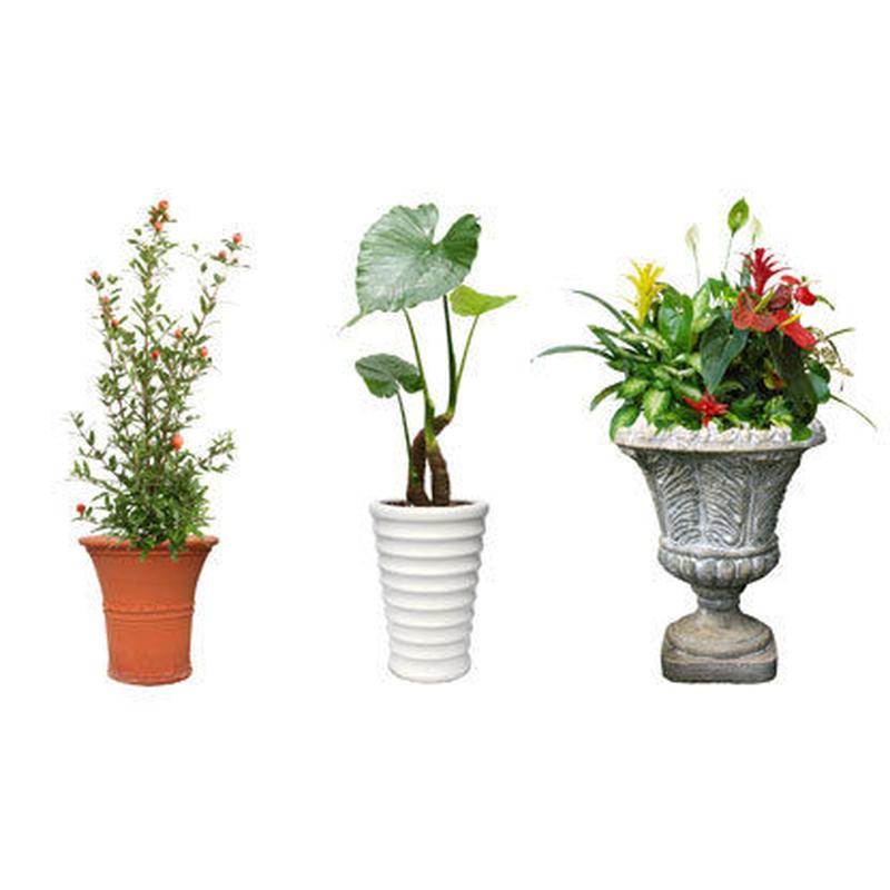 観葉植物素材 3個セット 8kp0014