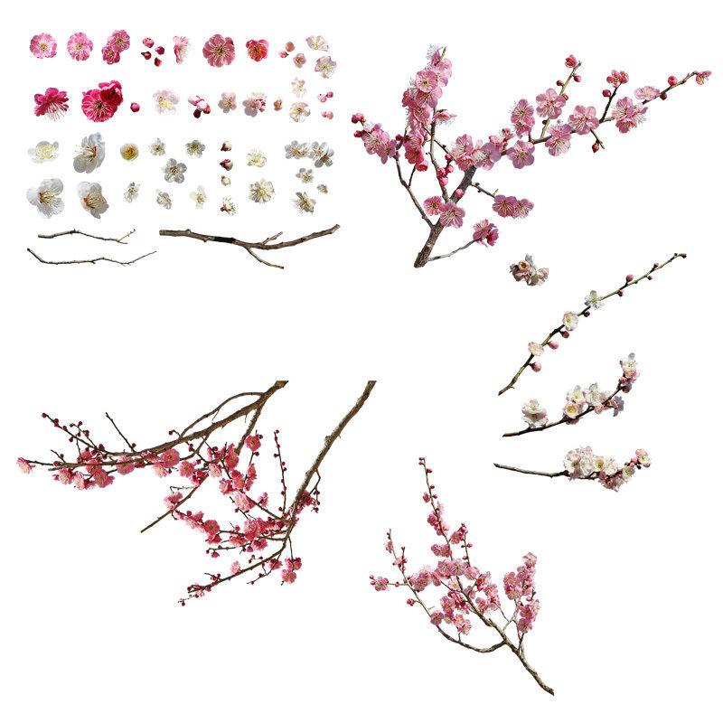 梅 切り抜きセット素材  - Plum trees 2u_01