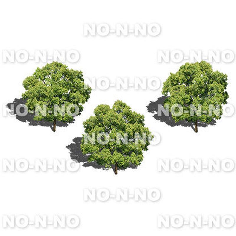 鳥瞰3本樹木 - BirdEye 2b002 クスノキ