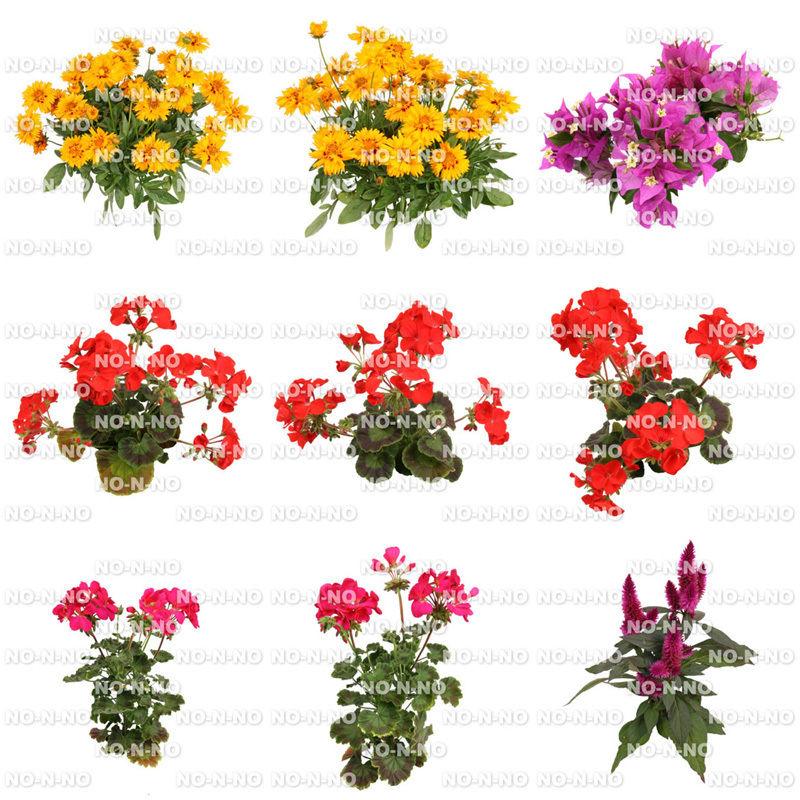 花の切り抜き素材 9個セット F_014