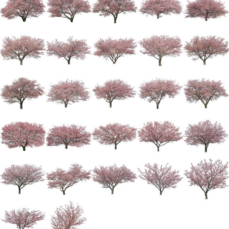 桜 27個セット  - Cherry Blossoms  sa_set03