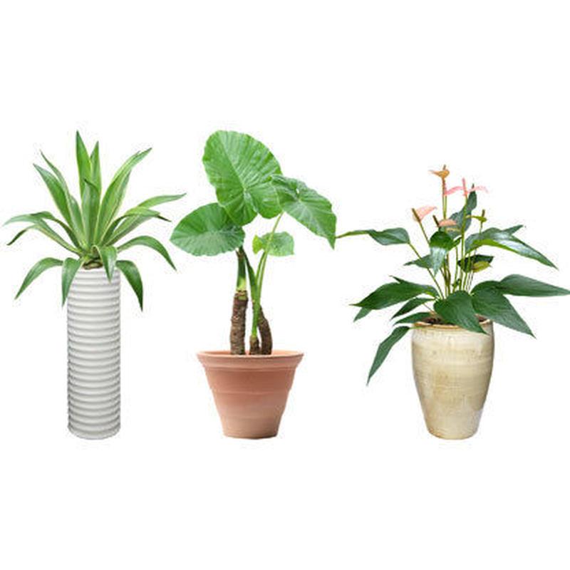 観葉植物素材 3個セット 8kp0005
