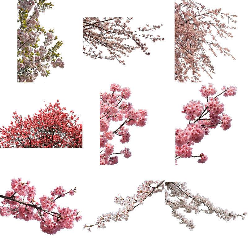 桜 切り抜き素材セット  - Cherry Blossoms   sa_004