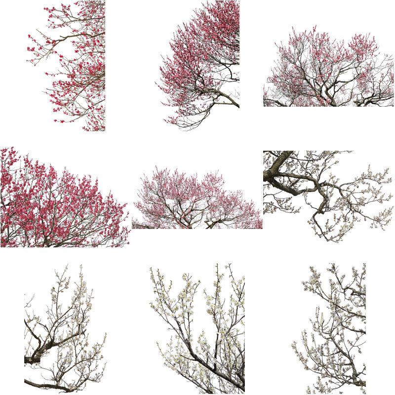 梅 切り抜きセット素材  - Plum trees  2u_03