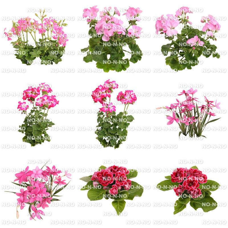 花の切り抜き素材 9個セット F_011