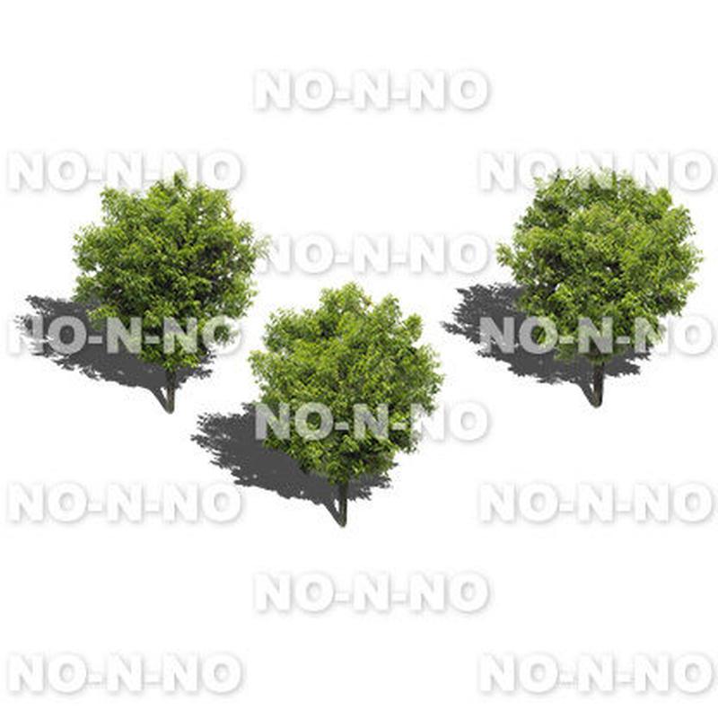 鳥瞰3本樹木 - BirdEye 2b005 シラカシ