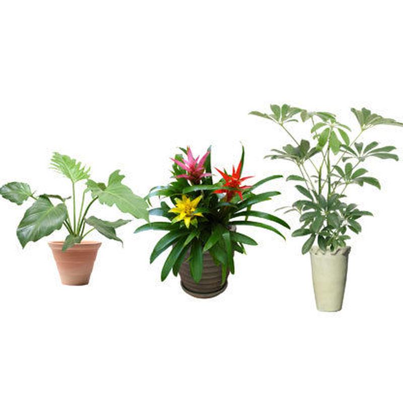 観葉植物素材 3個セット 8kp0008