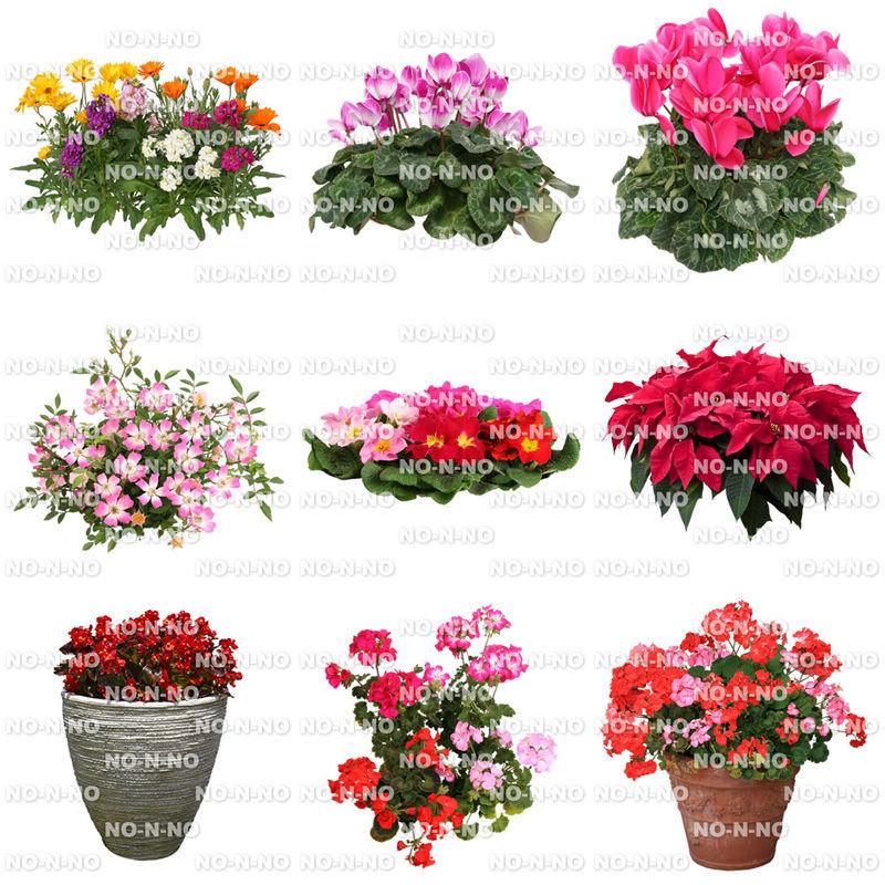 花の切り抜き素材 9個セット F_005