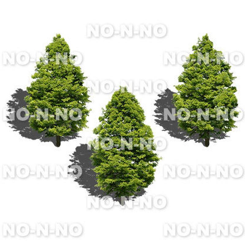 鳥瞰3本樹木 - BirdEye 2b006 メタセコイヤ