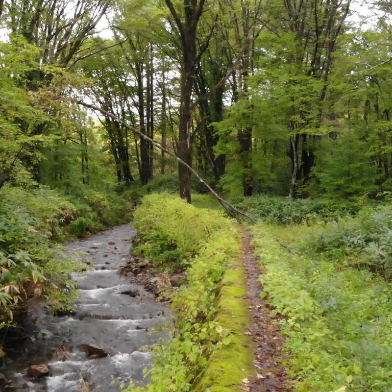 ドローン空撮-林の中の小川(FHD)-その1
