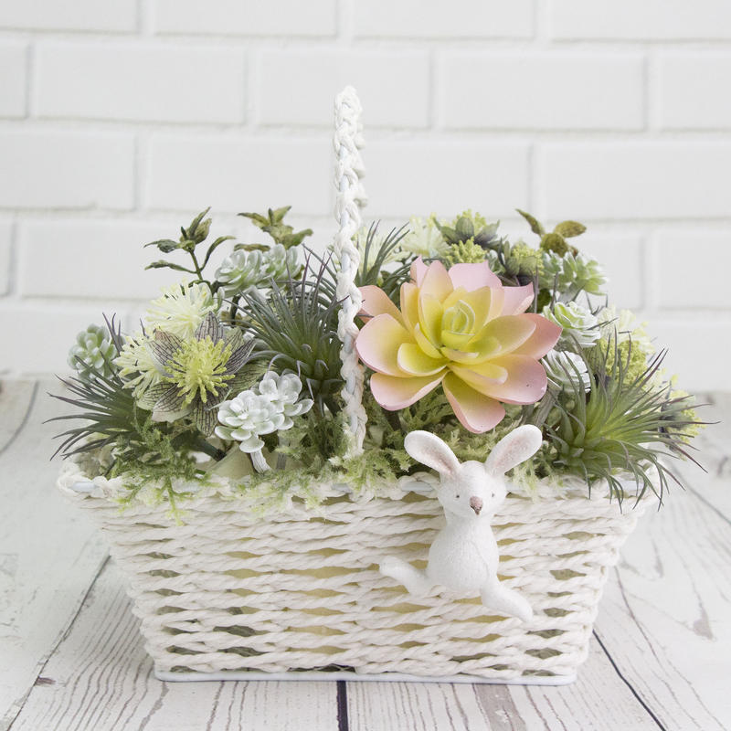 Rabbit Basket ~ 🌺 多肉植物 🌺 ~