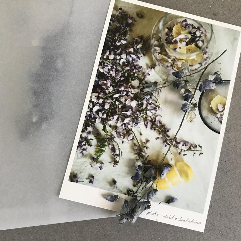 季節の葉書 藤  封筒付き 限定品