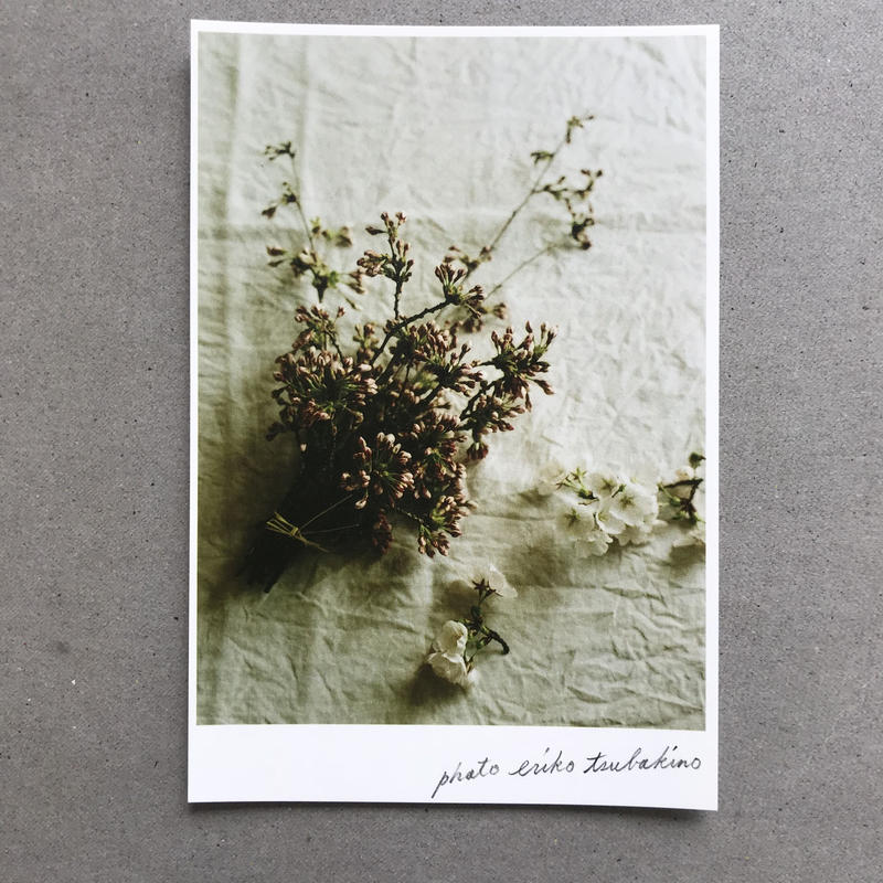 季節の葉書 桜