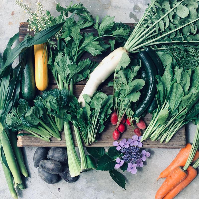 natural vegetable set / 2019.06.20 shipping