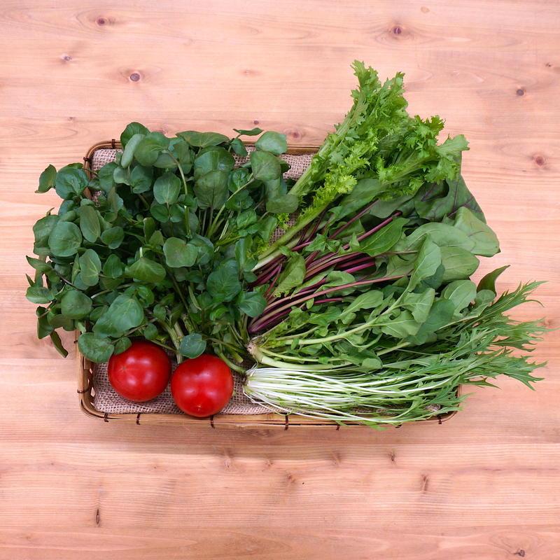 <フレッシュな葉物たっぷり> 季節のおまかせ サラダセット