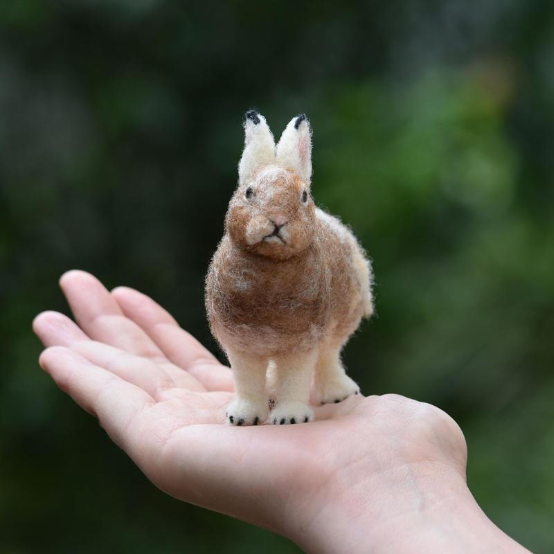 ユキウサギ 換毛中