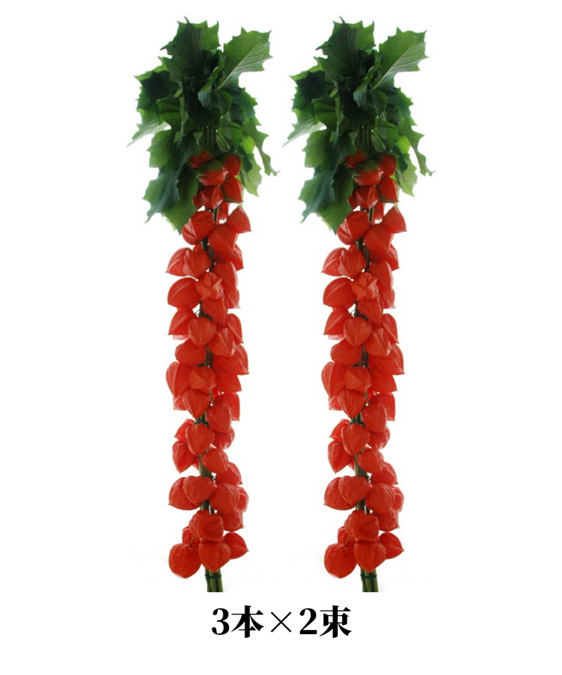 ほおずき切り花 葉付き 3本 ×2束